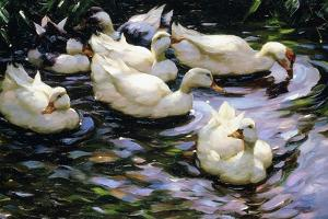 Ducks Swimming in a Sunlit Lake by Alexander Koester
