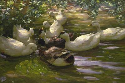 Ducks under Birch Twigs