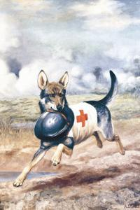 Red Cross Dog by Alexander Pope