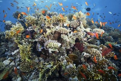 Reef Scene by Alexander Semenov