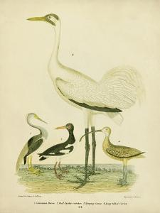 Antique Crane & Heron by Alexander Wilson