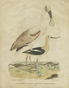 Embellished Spoonbill & Sandpipers by Alexander Wilson