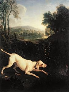 Louis XIV's Dog, Tane by Alexandre-Francois Desportes