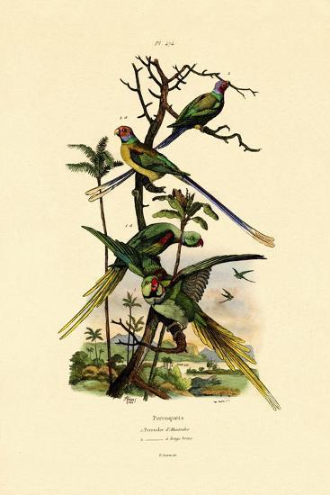 Alexandrine Parakeet, 1833-39--Giclee Print
