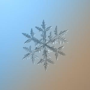 Snowflake on Smooth Blue-Brown Gradient Background. this is Macro Photo of Real Snow Crystal: Large by Alexey Kljatov