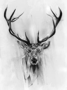 Red Deer by Alexis Marcou