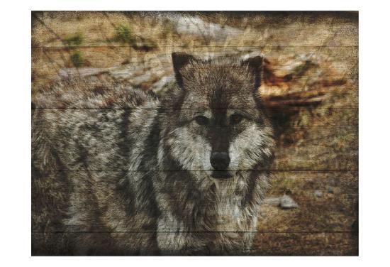 Alfa Wolf-Sheldon Lewis-Art Print