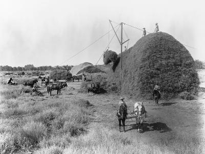 Alfalfa Haystack-C.E. Watkins-Photographic Print