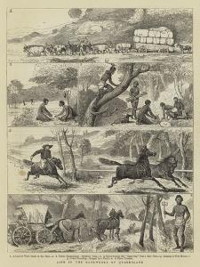 Life in the Backwoods of Queensland by Alfred Chantrey Corbould