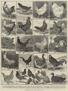 The Poultry Show at the Crystal Palace by Alfred Courbould