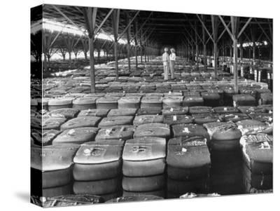 Archie Underwood and Another Man Standing on Top of Great Bales of Cotton in One of His Warehouses