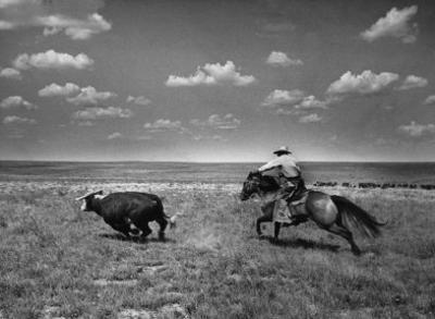 Biffin Ranch