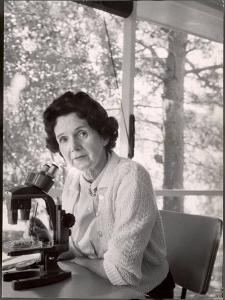 Biologist Author Rachel Carson Working with Microscope at Her Home by Alfred Eisenstaedt
