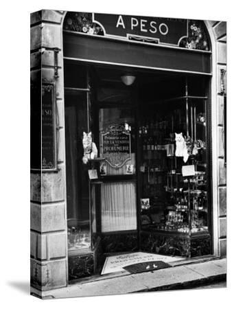 Cats Perching Outside Entrance to Perfume Shop
