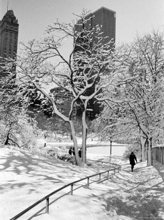 Central Park After a Snowstorm