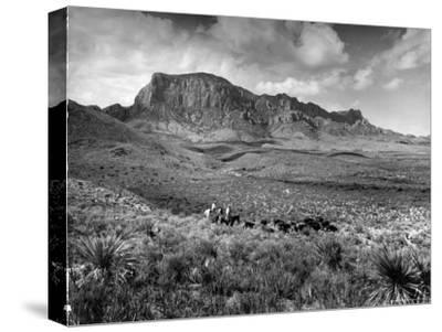 Distant of Cowboys Rounding Up Cattle with Mountains in the Background Big Bend National Park