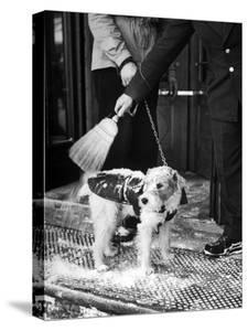 Dog Gets Snow Brushed from His Coat by Hotel Doorman by Alfred Eisenstaedt