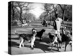 Dog Walkers in Central Park by Alfred Eisenstaedt