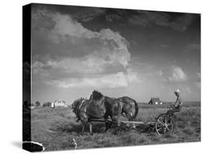 Farmer Driving Horses in the Field by Alfred Eisenstaedt