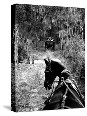 Horse-Drawn Carriages on Road Carrying Passengers to Deer Hunting Party