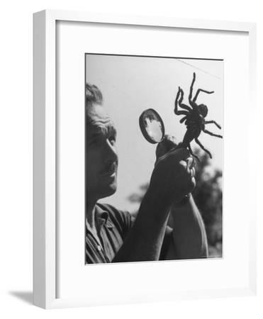 Man Examining a Large Spider, a Tarantula