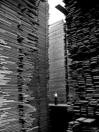 Man Standing in the Lumberyard of Seattle Cedar Lumber Manufacturing