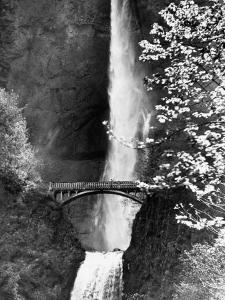 Multnomah Falls on Larch Mt. Where the Water Empties into the Columbia River by Alfred Eisenstaedt