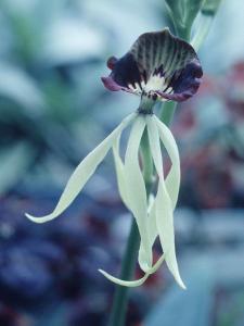 Orchids by Alfred Eisenstaedt