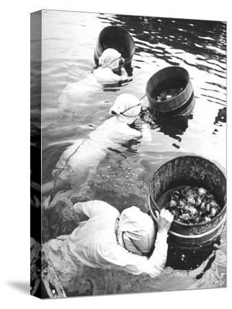 Three Female Mikimoto Pearl Divers with Buckets as They Prepare to Dive Down 20Ft. for Oysters