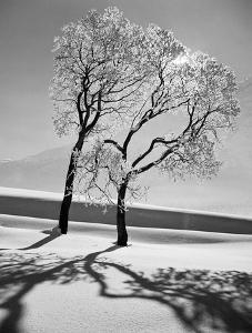 Beautiful Trees Black And White Photography Artwork For Sale