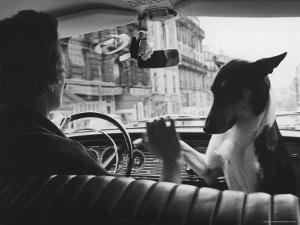 Woman Taxi Driver Sharing Front Seat with Pet Dog by Alfred Eisenstaedt