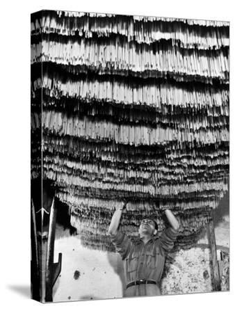 Worker at Pasta Factory Inspecting Spaghetti in Drying Room