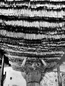 Worker at Pasta Factory Inspecting Spaghetti in Drying Room by Alfred Eisenstaedt