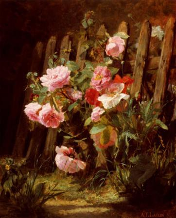 Pink Roses by a Garden Fence