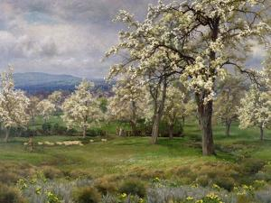 The Pear Orchard, C.1903 by Alfred Parsons