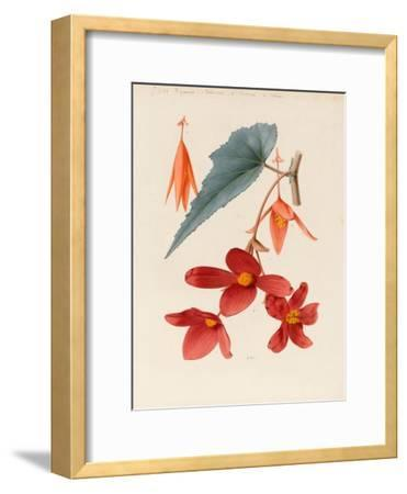Analytical Drawing of a Flower, Leaves and a Section of Branch (W/C and Bodycolour on Card)