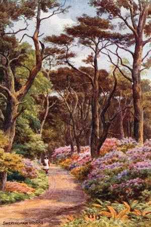 Sheringham Woods by Alfred Robert Quinton