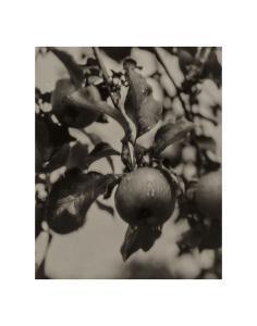 Apple and Drops of Rain, Lake George, 1922 by Alfred Stieglitz
