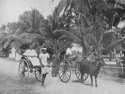 'Rickshaw and Racing Hackery', c1890, (1910)