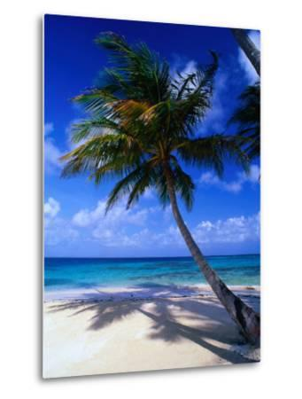 A Palm Tree Bends to the Caribbean Sea on a Key in the San Blas Islands, San Blas, Panama