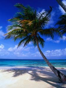 A Palm Tree Bends to the Caribbean Sea on a Key in the San Blas Islands, San Blas, Panama by Alfredo Maiquez
