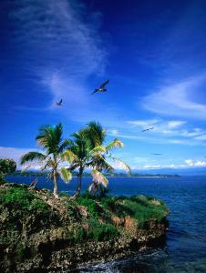 Birds Flying Over Palm Trees at Swan Key, Bocas Del Toro Islands, Panama by Alfredo Maiquez