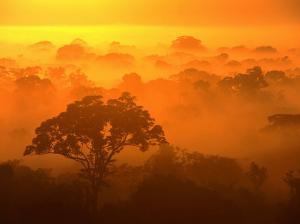 Morning Mist Over the Tambopata Candamo National Park, Amazonas, Peru by Alfredo Maiquez