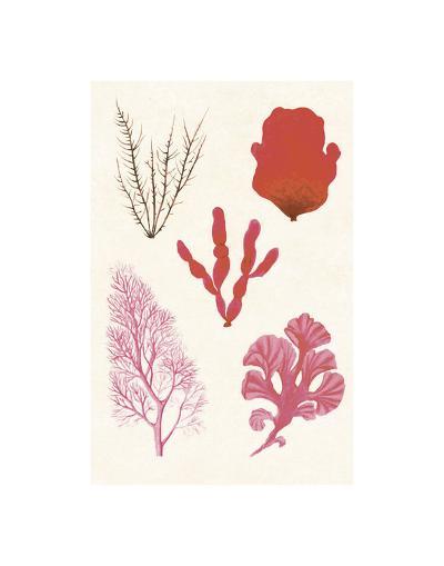 Algae 21--Art Print