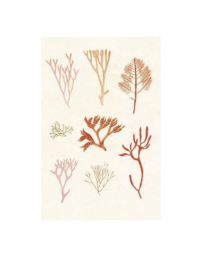 Algae 7--Art Print