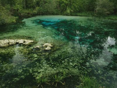 Algae Bloom in a Woodland Pond or Marsh-Raymond Gehman-Photographic Print