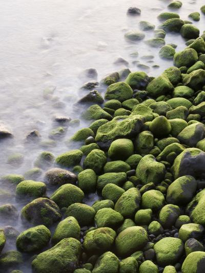 Algae-Covered Boulders on Beach-Holger Leue-Photographic Print