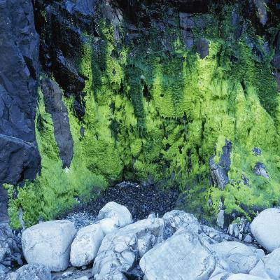 Algae Growing on Rock Cliff-Micha Pawlitzki-Photographic Print