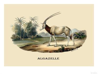 https://imgc.artprintimages.com/img/print/algazelle_u-l-p2c6yj0.jpg?p=0