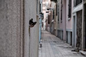 Dantel Street Cat by Ali Ayer